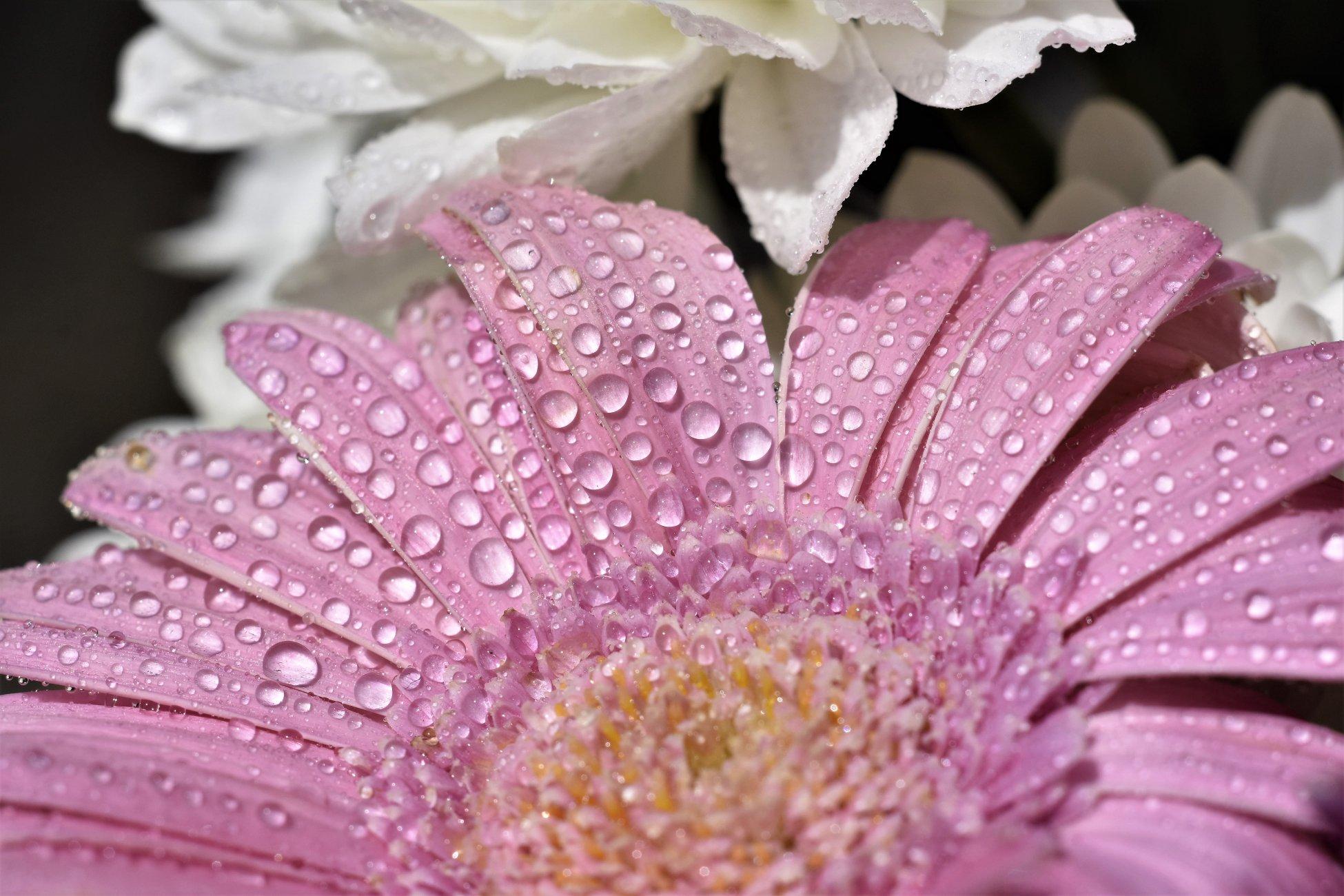 Water on flower