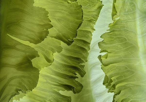 Cauliflower Leaves by iangilmour