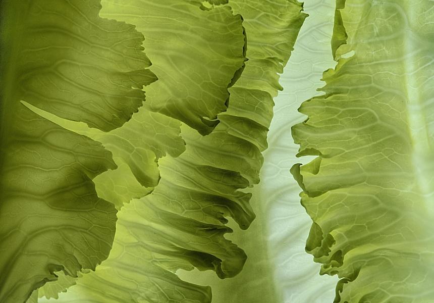 Cauliflower Leaves