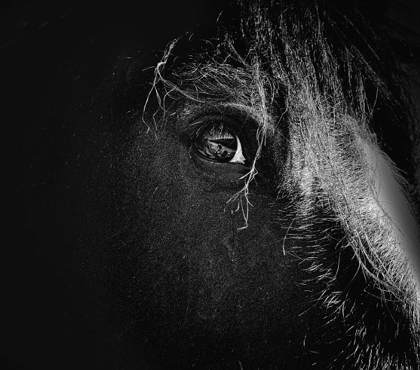 The Dark Horse by Skyerocket