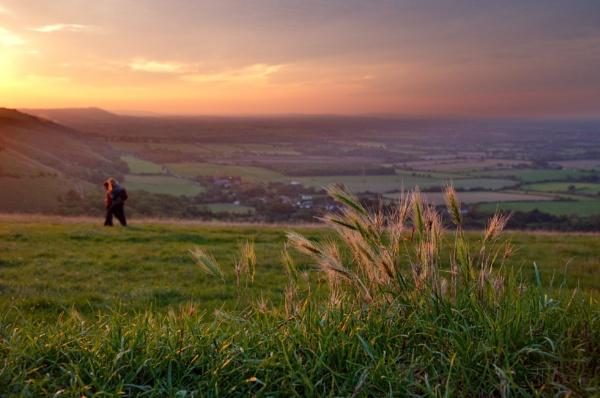 sunset grass by alfpics