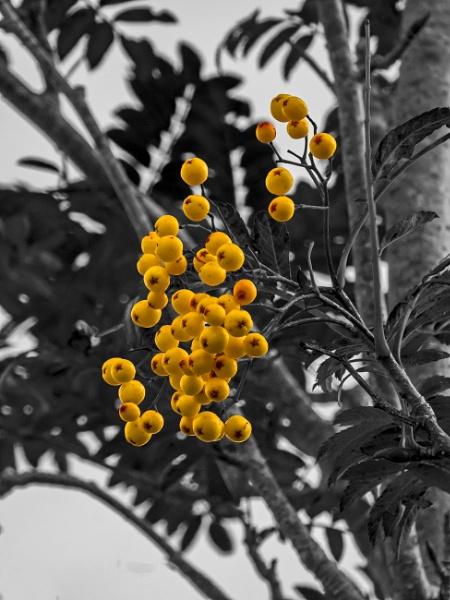 Autumn Berries by Bore07TM