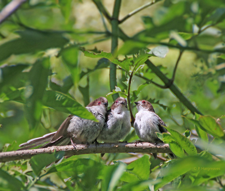 three little birds