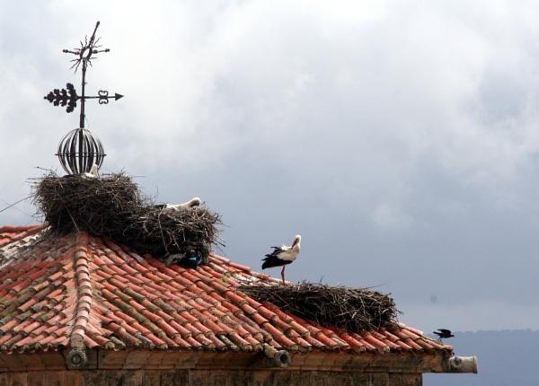 Stork apartments by BlueJonnyp