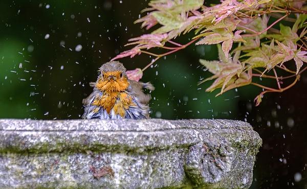 Bathtime by photographerjoe