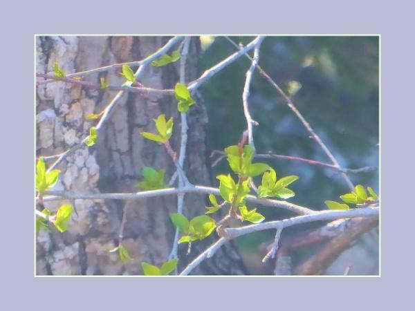 Spring Through a Window by Joline
