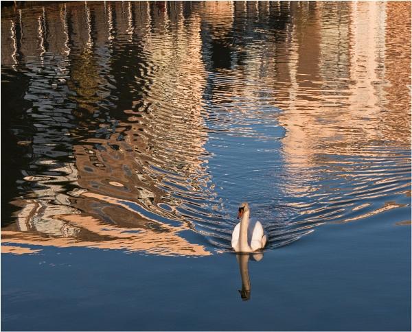 Swan lake. by franken