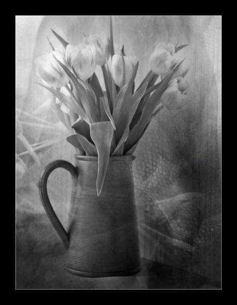 Tulips by helenlinda