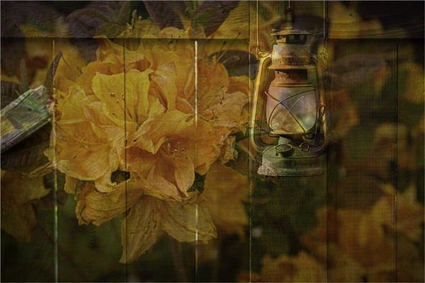 Fence Flower by Daisymaye