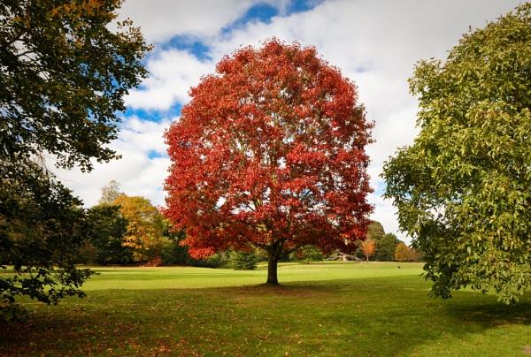 Clumber park near Worksop by paulsfrear