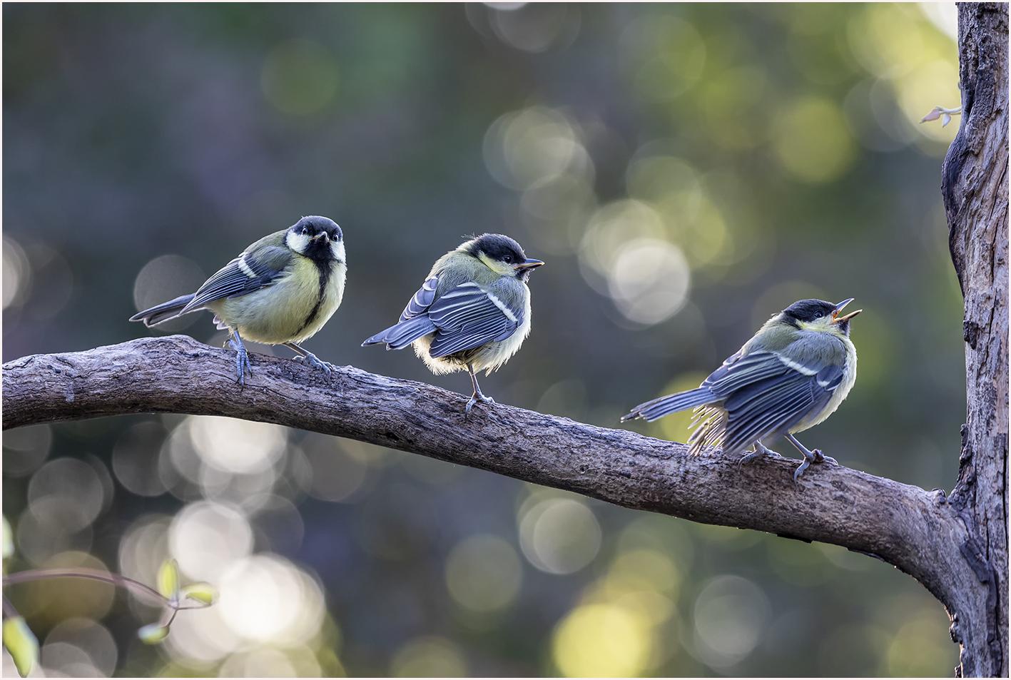 Three wise birds