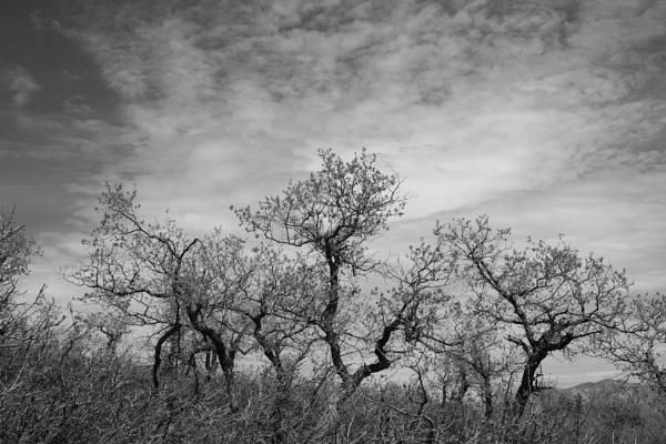 Dancing trees by mlseawell