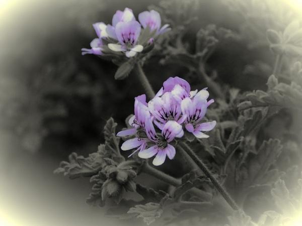 LITTLE PURPLE FLOWERS. by kojack