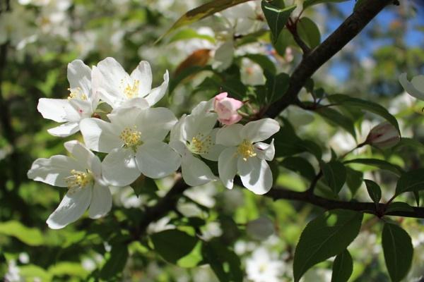 Flower tree by carol01