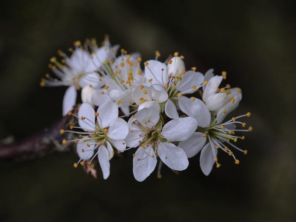 Blossom up close by boov