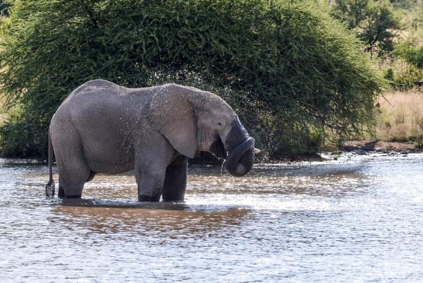 Bigfoot, always thirsty. by Coen