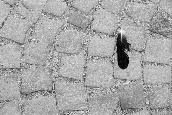 Feather on a stone tiles by rninov