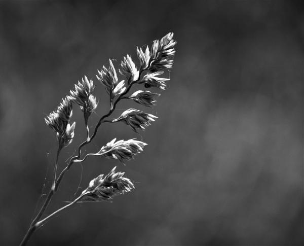 Grass in the garden by Madoldie
