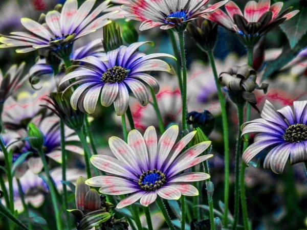 Funky flowers by KrazyKA