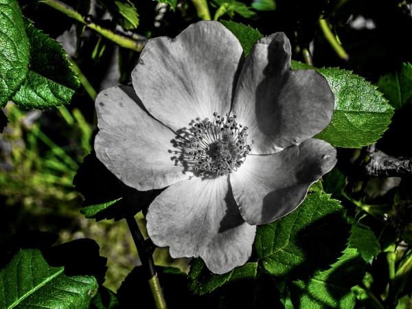 Coloursplash flower by KrazyKA