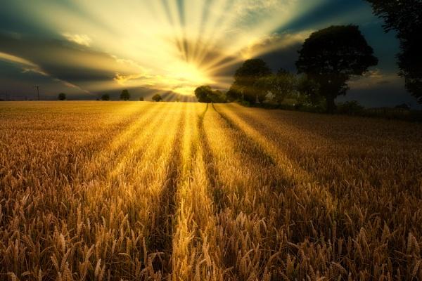 "\""The Wheat Field\"". by adrianedwa"