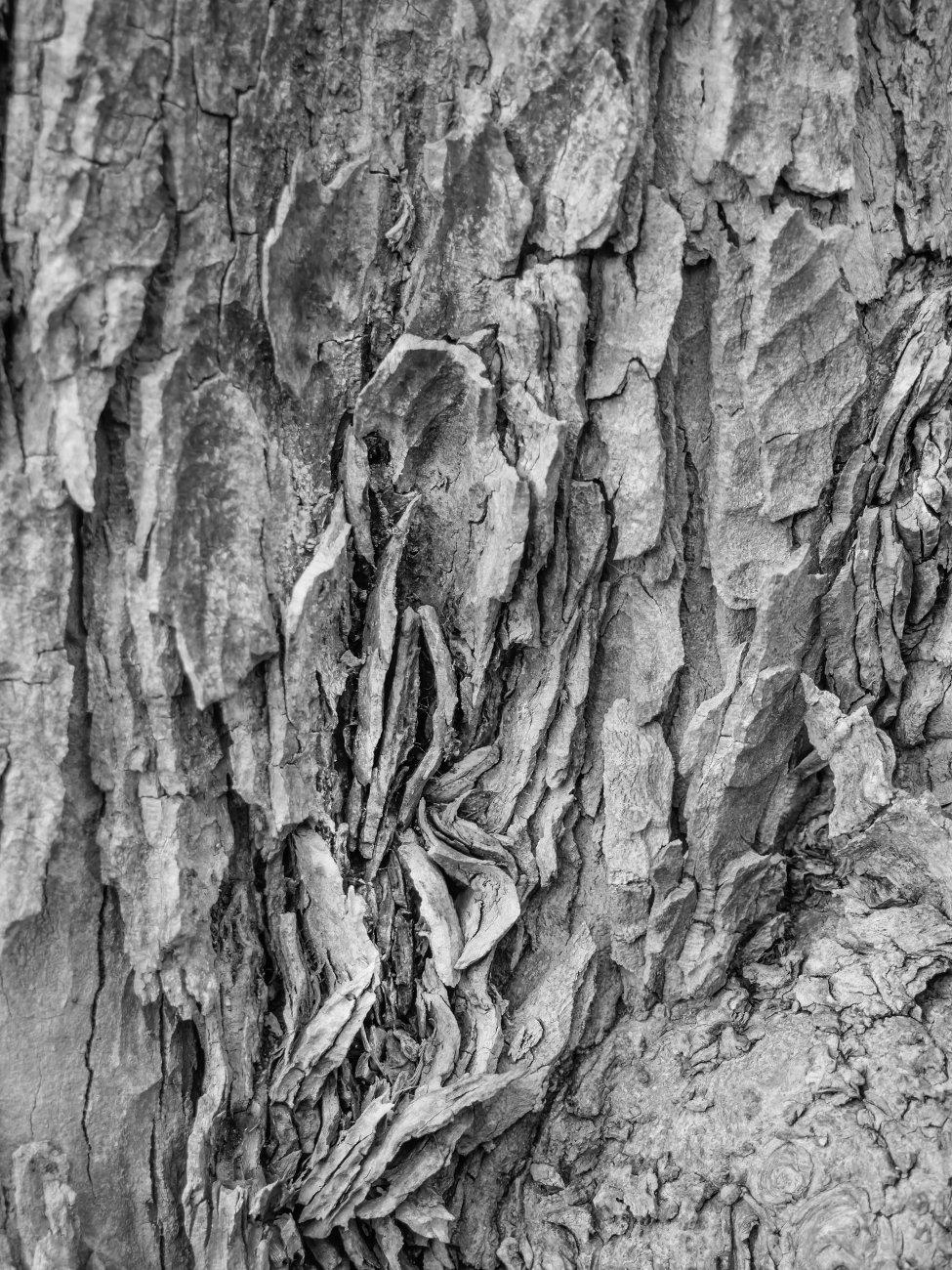 Oak Abstract