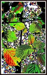 Leaves Tableau