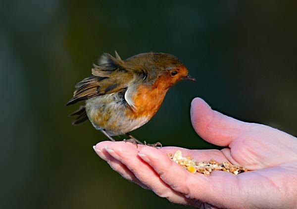 Bird in hand by dven