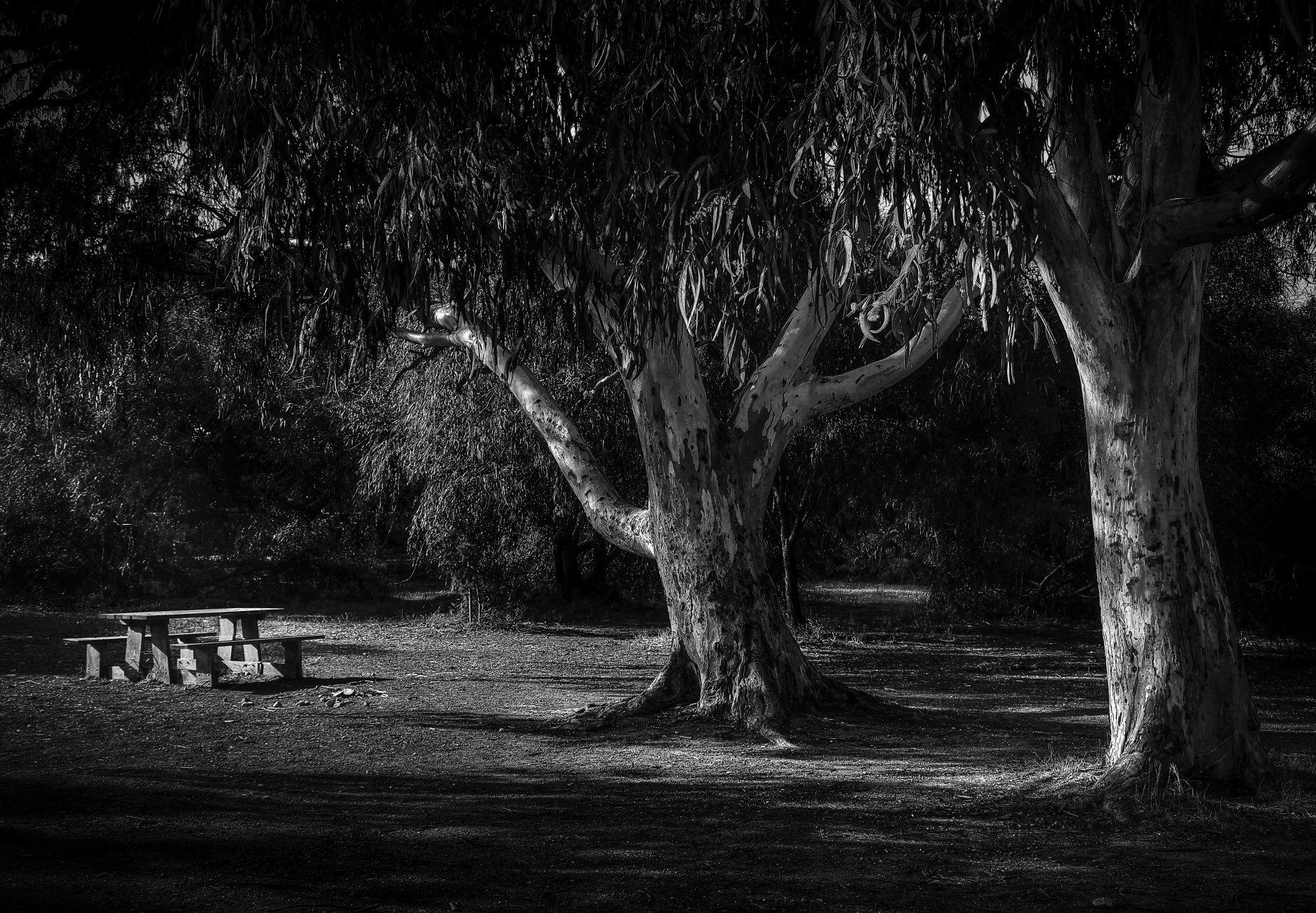 The Monochrome Beauty of ''Light and Shade''-------- Kennedy Grove Malta