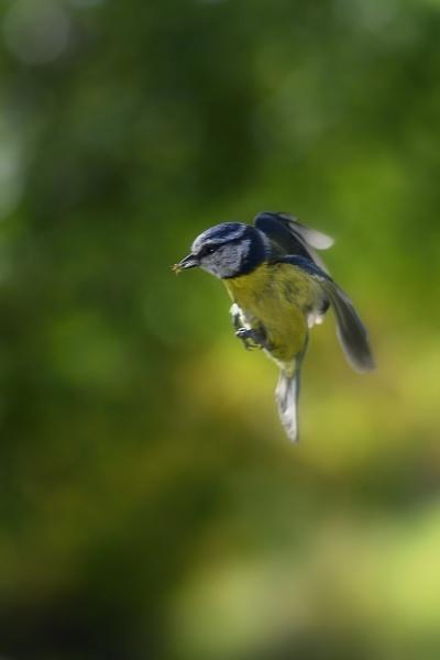 Bluebug by zwarder