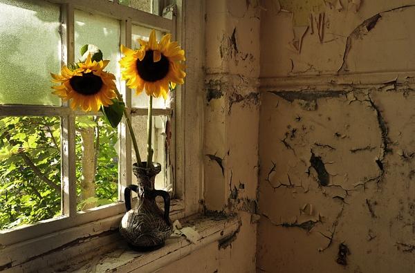Sunflowers in the Window. by Buffalo_Tom