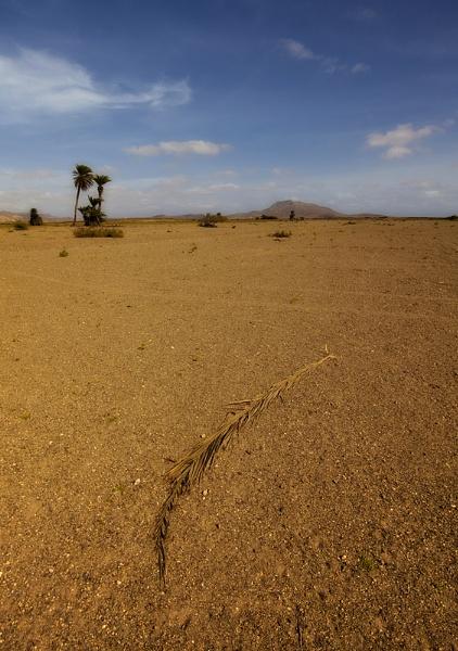 A Desolate Landscape. by Buffalo_Tom