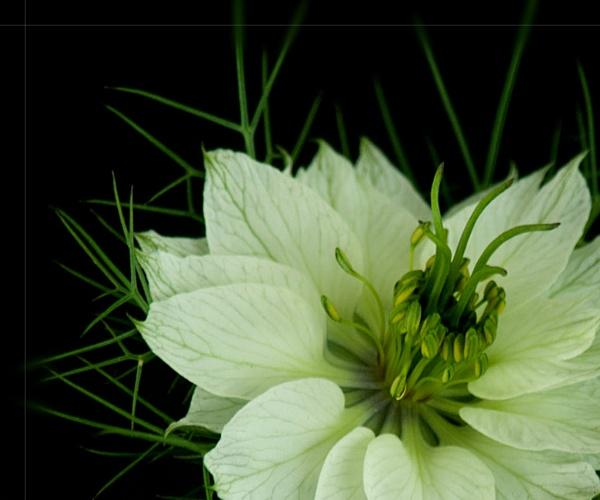 Flower by DERIC