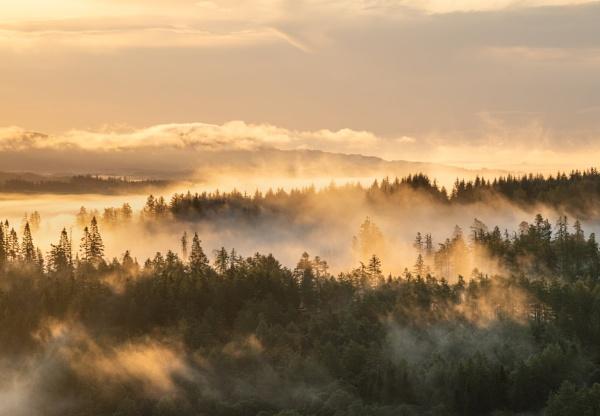 Callander Woods 2 by PaulHolloway