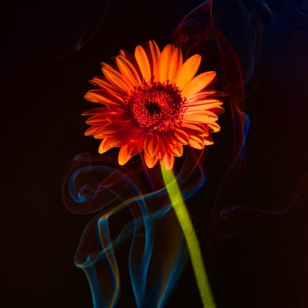 blue smoke and orange flower by elmer1