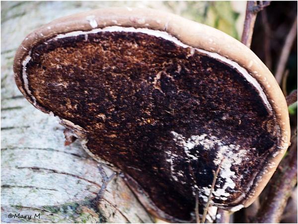 Fungus by marshfam19