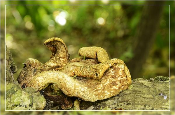 Fungus 3 by marshfam19