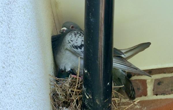 snug fit by sparrowhawk