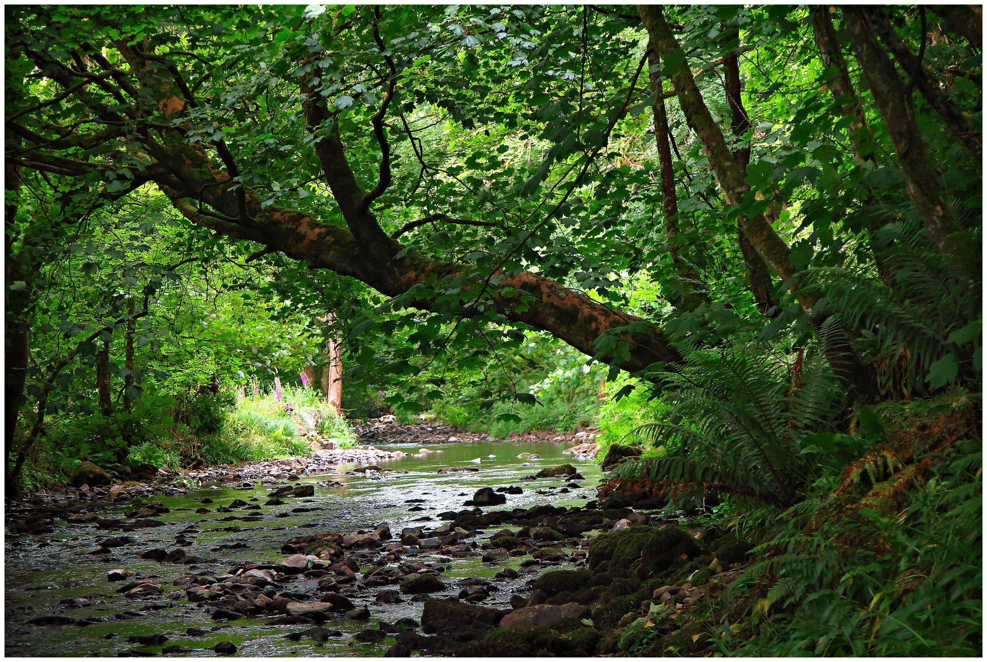 Cwm Woods