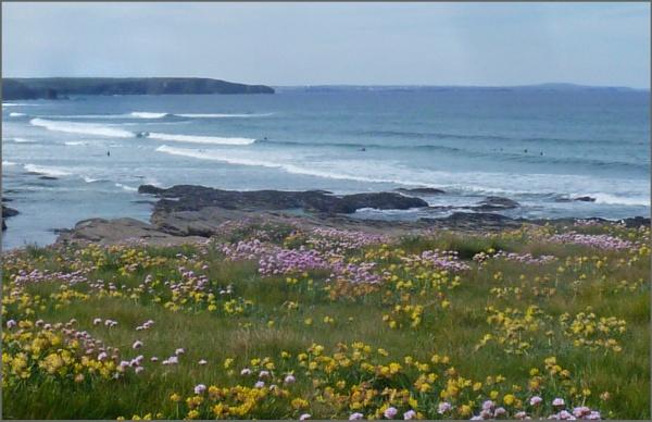 Coastal flowers by JuBarney