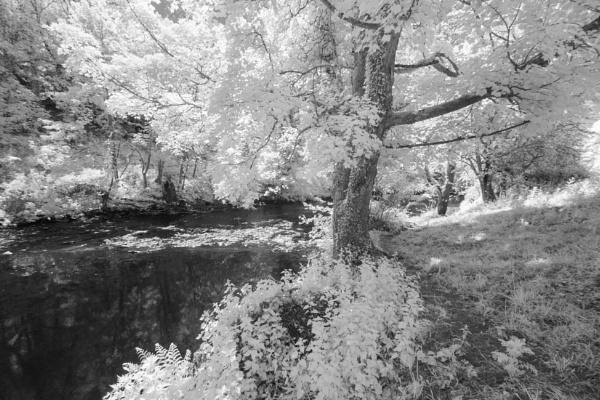 Riverside Walk by DalesLass