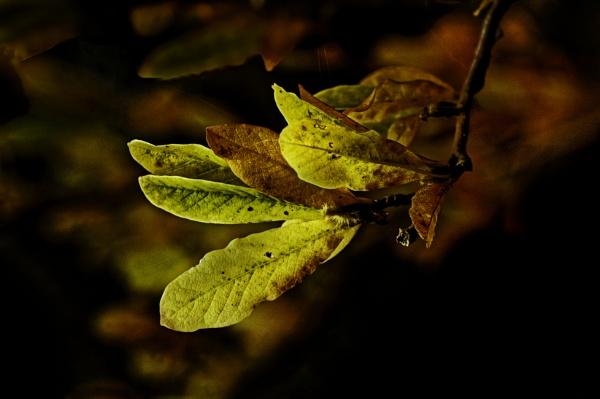 Autumn Colours by akh
