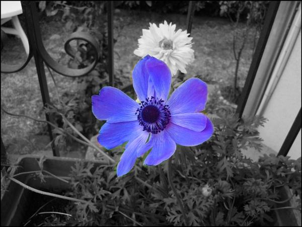 purple by laura1