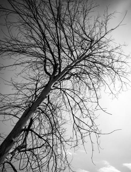 Dead tree by banehawi