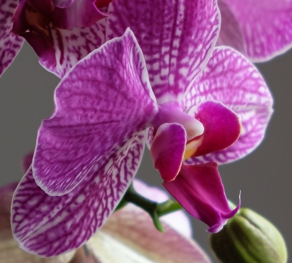 Orchid by Nikonuser1
