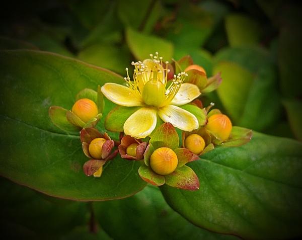 Mystery Flower. by Umberto_V