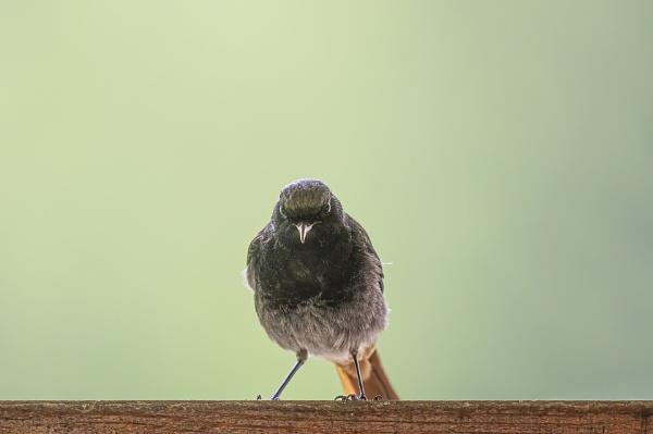 Angry bird by robert61