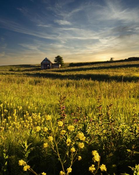 Flowers In A Field by Minty805