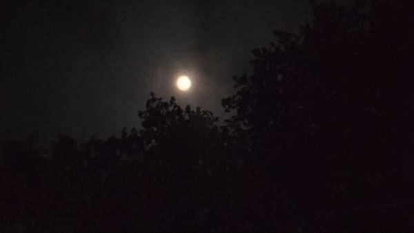 Full moon. by Rudranath