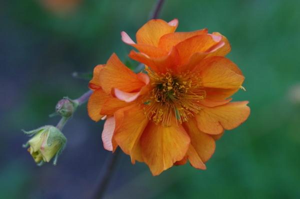 Definitely Orange by Kako